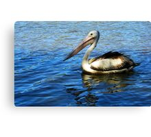 Pelican on blue clear water Canvas Print
