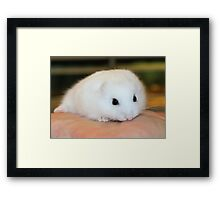 New Hamster called Buttons Framed Print