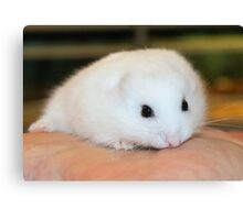 New Hamster called Buttons Canvas Print
