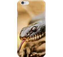 Large Whipsnake (Coluber jugularis) photographed in Israel in March iPhone Case/Skin