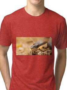 Large Whipsnake (Coluber jugularis) photographed in Israel in March Tri-blend T-Shirt
