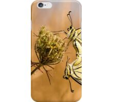 Two mating Southern swallowtail (Papilio alexanor) butterflies iPhone Case/Skin