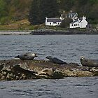 Plockton Seals by Kat Simmons