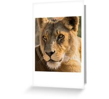 530 lioness Greeting Card
