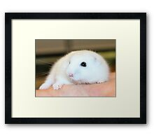 Cinders - Sister to Buttons Framed Print