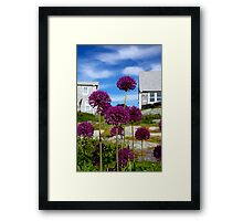 Onion blossoms Framed Print