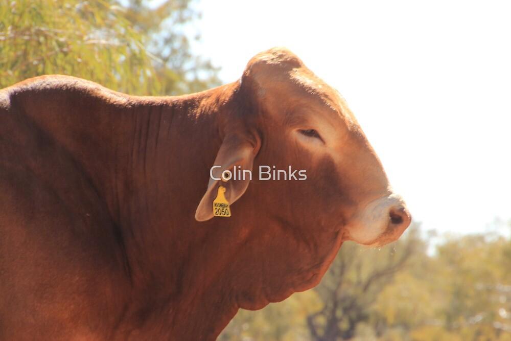 Bull!!!... by Colin Binks
