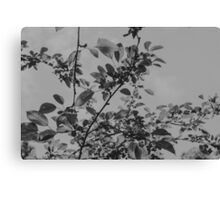 botanica Canvas Print