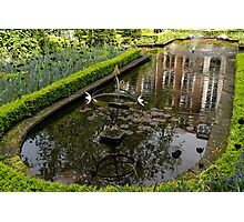Hidden Tranquility - Beautifully Landscaped Garden with a Fountain Photographic Print
