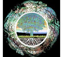 Tree of Life Circle of Life Photographic Print