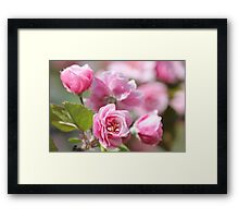 Apple Blossoms - Flowers - Photograph Framed Print