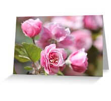 Apple Blossoms - Flowers - Photograph Greeting Card
