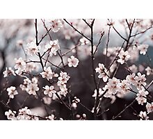 Joy of Spring Photographic Print