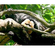 Golden Faced Saki Monkey Photographic Print