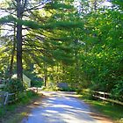 Country Road New Hampshire by MAMMAJAMMA