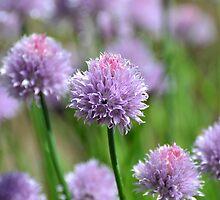 A Subtle Kick of Lavender by RoyceRocks