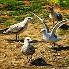 You are ignoring me ! by Simon Duckworth
