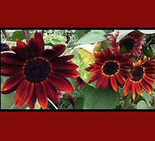 Red Sunflower by AnnaKat