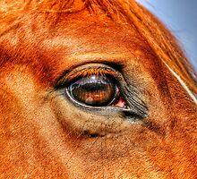 Guardian's Eye by Skye Ryan-Evans