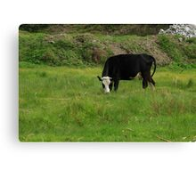 Cow on a Farm Canvas Print