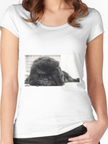 The Affenpinscher (translated from German as Monkey-Terrier) Women's Fitted Scoop T-Shirt