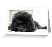 The Affenpinscher (translated from German as Monkey-Terrier) Greeting Card
