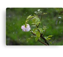 Rose in the Rain Canvas Print