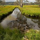 Styx River - NSW Australia by Barbara Burkhardt