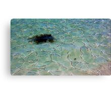 Sea Monster? Canvas Print