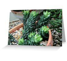 The Greenest Succulent Greeting Card
