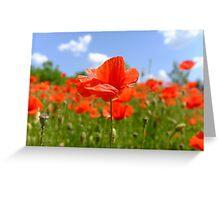 redrose Greeting Card