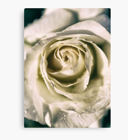 abstract rose Canvas Print