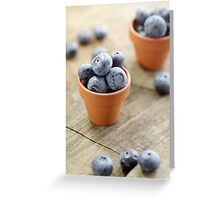 Blueberries potty in a country style Greeting Card