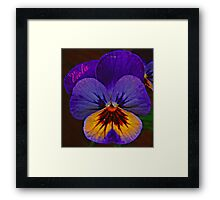 Viola Blue Framed Print