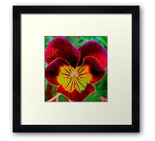 Viola Red Framed Print