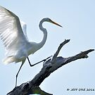 Dancing on a Tree (Great Egret) by Jeff Ore