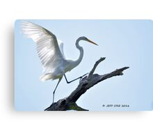 Dancing on a Tree (Great Egret) Canvas Print