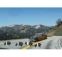 You just can't avoid them!  Even in the mountains Dick encounters road hogs! Photographic Print