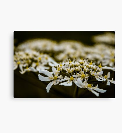 White and Yellow Canvas Print