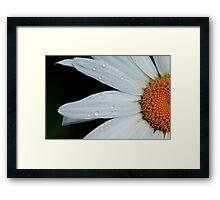 Daisy rising Framed Print