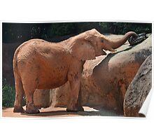 Happy Baby Elephant Poster