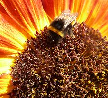 Sunflower and Bee by Ingrid  Sloss Demazeux