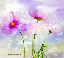 Cosmos Summer by Bunny Clarke