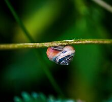 Even Snails can be pretty by Mudgers