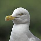 ...just a Seagull...  as is  by John44