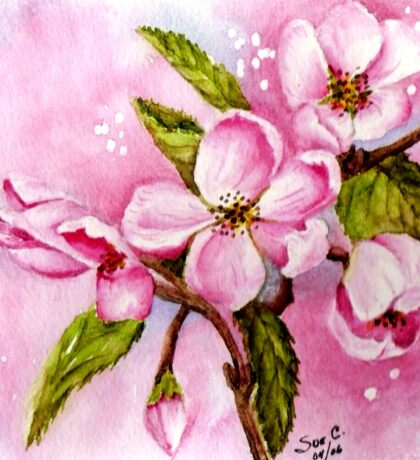 DELICATE PINK APPLE BLOSSOMS Sticker