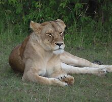 Lioness relaxing on the Masai Mara by KACPhotos
