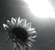 Black and white Sunflower by Kaiarose