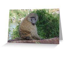 Baboon at Lake Nakuru Greeting Card