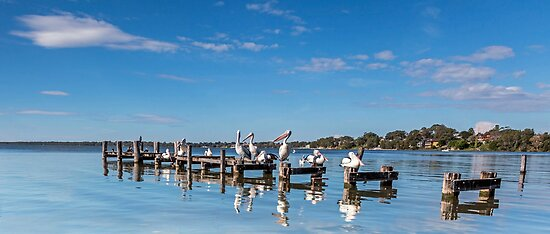 Pelicans on the Pier - Toukley NSW Australia by Beth  Wode